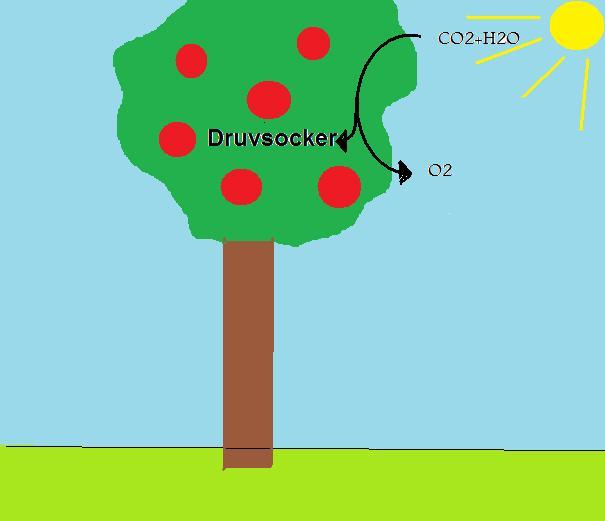 fotosyntesen enkelt forklart